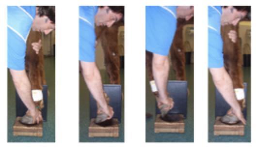 Lorenzo d'Arpe Medico Veterinario è esperto di laminite nel cavallo, navicolite e in tutte le patologie del piede del cavallo. Come evitare un cavallo zoppo
