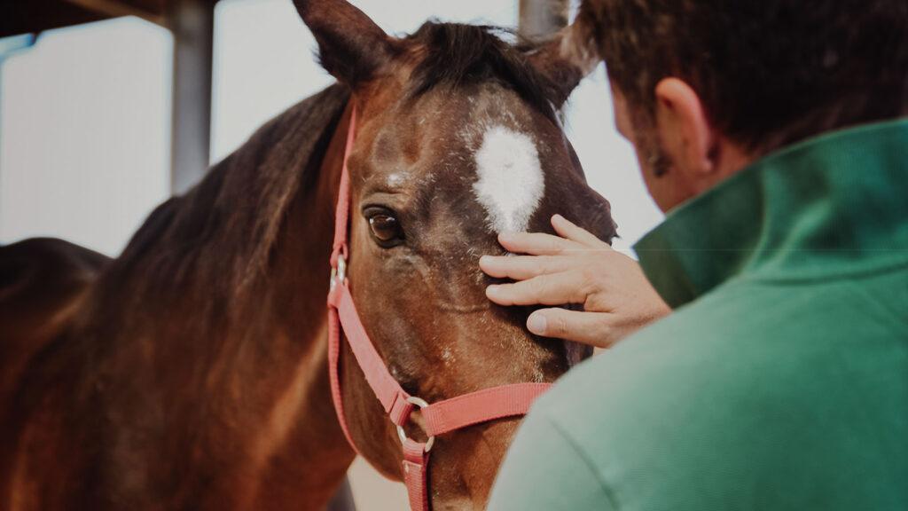 Lorenzo d'Arpe Medico Veterinario è esperto di laminite nel cavallo, navicolite e in tutte le patologie del piede del cavallo. Come evitare un cavallo zoppo e prendersi cura del cavallo