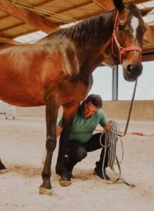 Lorenzo D'Arpe Veterinario: unghia del cavallo, che cos'è il Corium e come è correlato al benessere del piede del cavallo