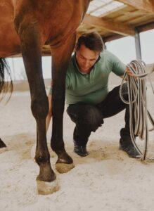 Lorenzo d'Arpe Medico Veterinario è esperto di laminite nel cavallo, navicolite e in tutte le patologie del piede del cavallo. Come evitare un cavallo zoppo e prevenire la zoppia