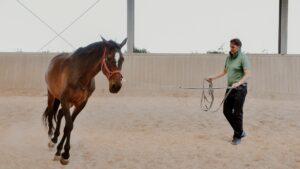 Lorenzo d'Arpe Medico Veterinario è esperto di laminite nel cavallo, navicolite e in tutte le patologie del piede del cavallo. Come evitare un cavallo zoppo e averne cura