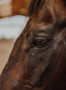 Lorenzo d'Arpe Medico Veterinario è esperto di laminite nel cavallo, navicolite e in tutte le patologie del piede del cavallo. Come evitare un cavallo zoppo partendo dalla cura del piede