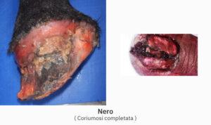 Lorenzo d'Arpe Medico Veterinario è esperto di laminite nel cavallo, navicolite e in tutte le patologie del piede del cavallo. Come evitare un cavallo zoppo avendo cura dell' unghia del piede